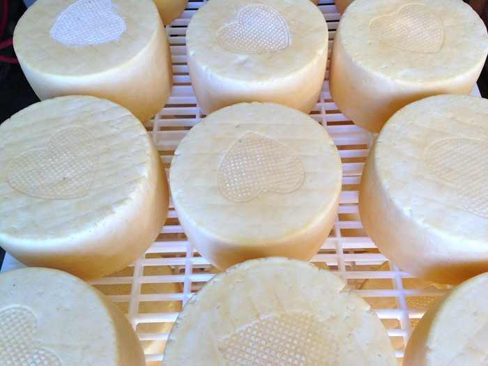 Young wheels of a tomme-style cheese from Bleating Heart
