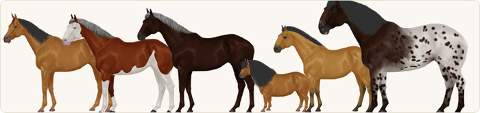Prototypes from left to right: Arabian, Quarter Horse, Thoroughbred, Shetland Pony, Przewalski's Horse and Spotted Draft Horse