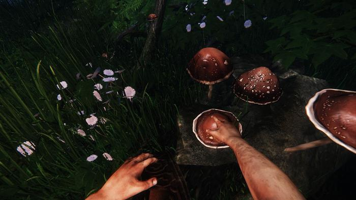 The Druid gathers a mushroom, soon to be crafted into a healing salve.