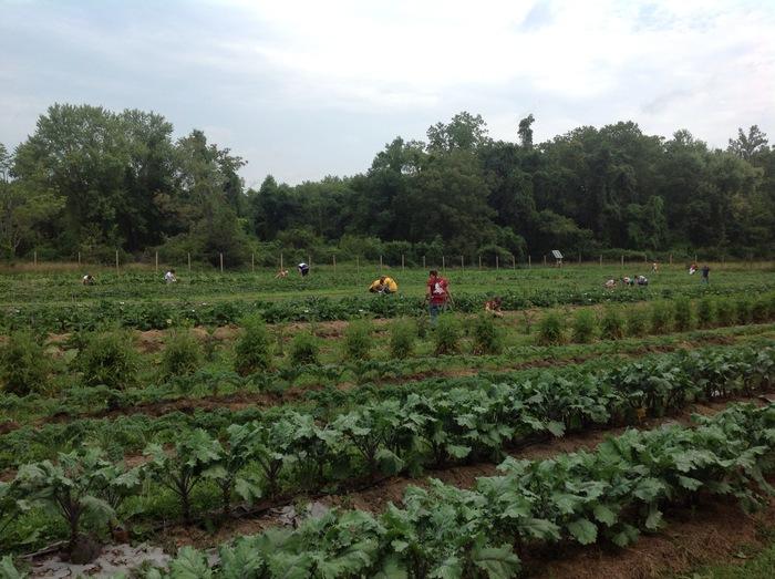 Students volunteering in our largest garden