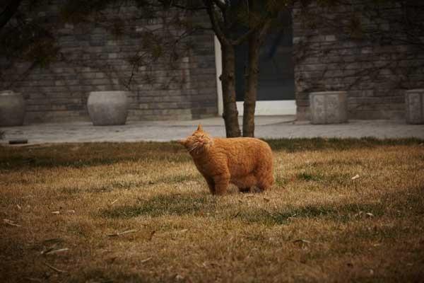 One of Ai Weiwei's cats
