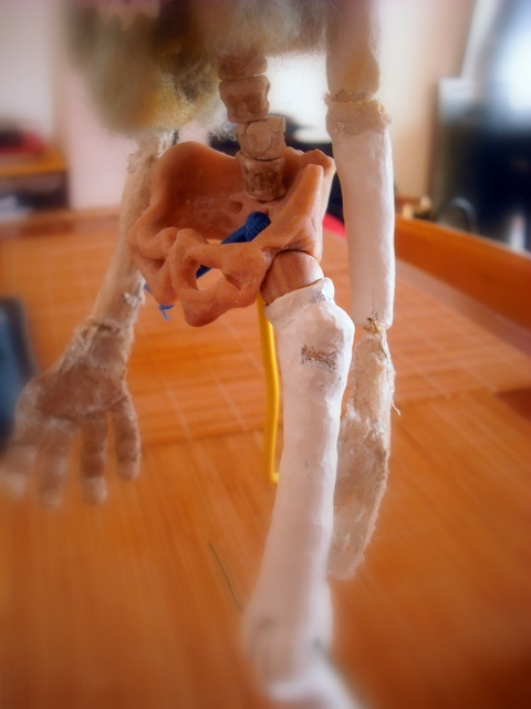 Here's a close-up of that ball joint. The only thi ng holding the joint and femur to the hip is a piece of bungee.