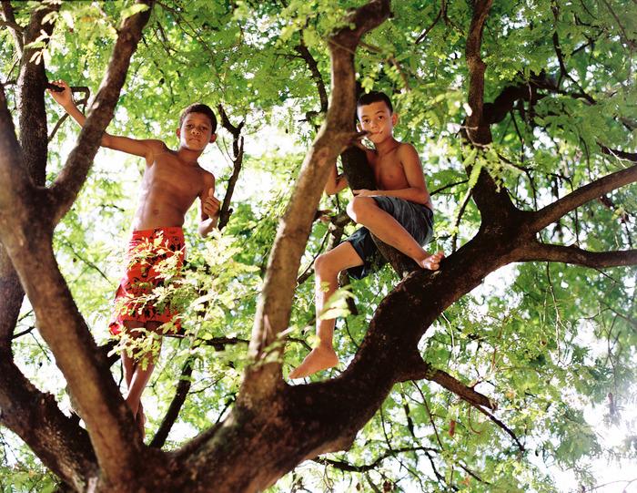 Escaladores de árvores - Trabajaras, 2013