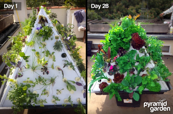 Pyramid Garden Aeroponic Vertical Growing System By Cary