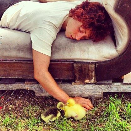 This was not staged. It is a real nap with real goslings.