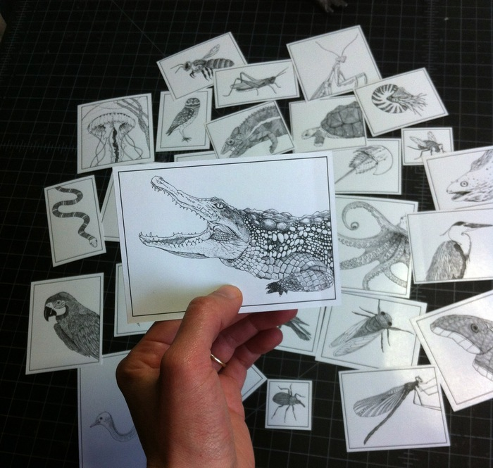 """The $10 reward includes stickers featuring pen & ink drawings from """"Creation Myth."""" CHOOSE TWO half-letter sheets of: sea creatures, birds, insects, or reptiles/amphibians."""