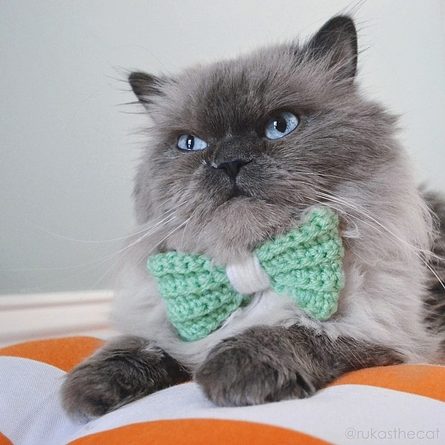 """Rukas says, """"These bow ties will make you look like a boss!"""""""