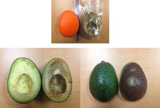This is the same avocado as pictured above. This photo was taken at the 12 day mark. The one on the left has been in a Seally Cap and the one on the right in a plastic bag. They were both stored in a refrigerator. NO lime or lemon juice have been added.