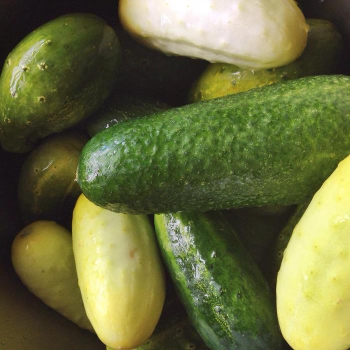 GARY DUCKET™ naturally farmed cucumbers: three varieties