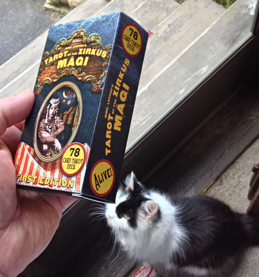 Box of Tarot Cards + Pussyquat. (Pussyquat Sold Separately)