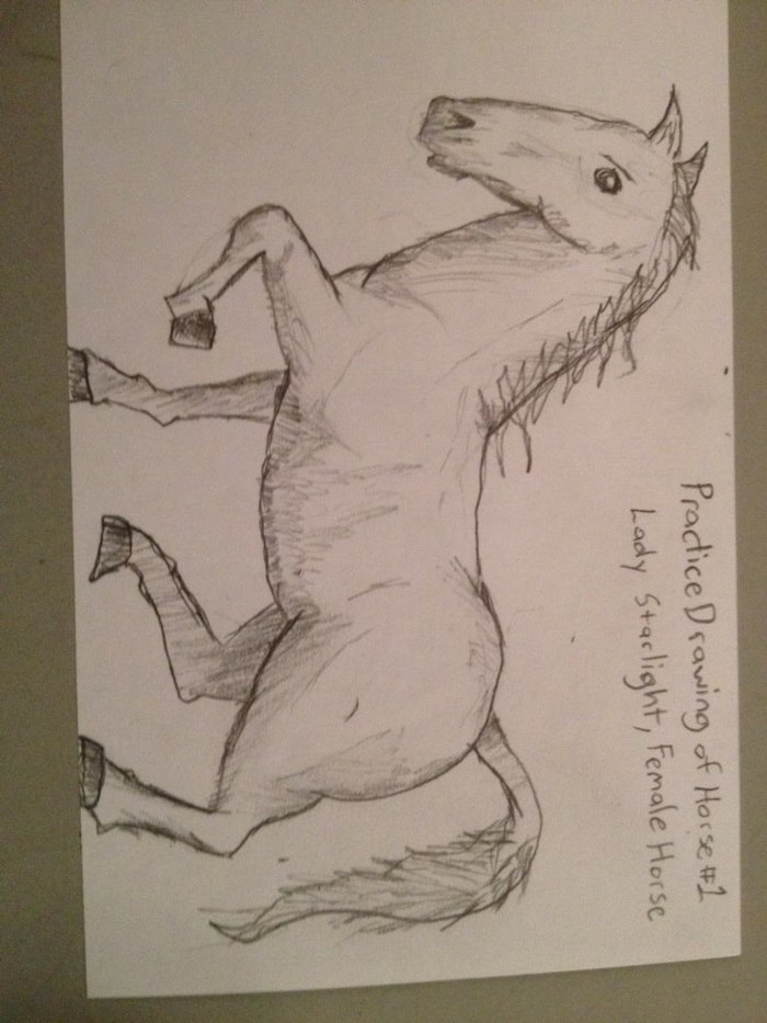 Practice Drawing of Horse #1
