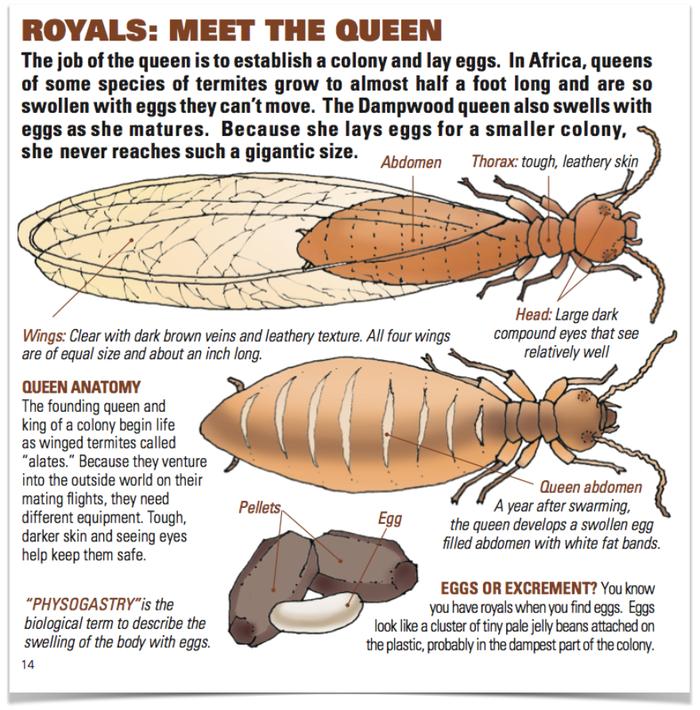 Termitat\', una colonia de termitas en tu casa | Trasdós
