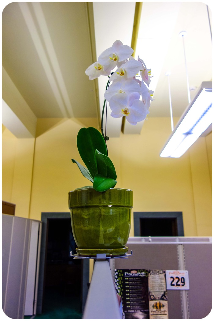 Petalstal invite nature into your cubicle w this plant stand by shawn don kickstarter - Cubicle planters ...