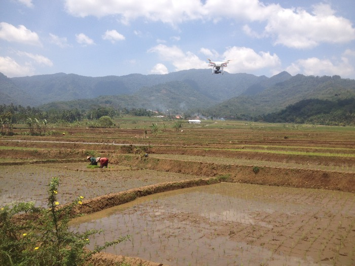 Filming farmers planting rice seedlings