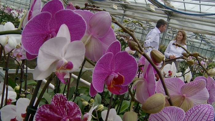 Maike consulting with Robert Meyer, the CEO of the premier orchid producer in Germany. He is highly sensitive.