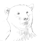Bearsketch.medium