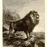 Barbarylion1898.medium