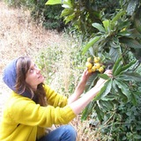 La_loquats2.medium