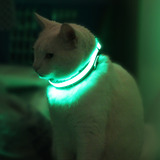 Green_cat.medium