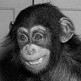 Birthdaychimp.medium