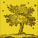 Yellow%20tree%20image.medium
