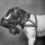 Doggie_gas_mask_2.medium