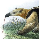 Tamandua_thumbnail.medium