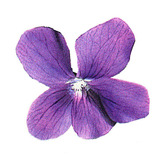 Facebook_violet_icon.medium