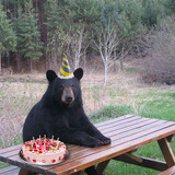 Bear-birthday-cake.medium
