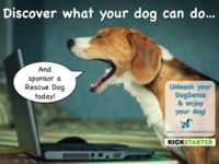 Bringing Dog Training to The Virtual Age!