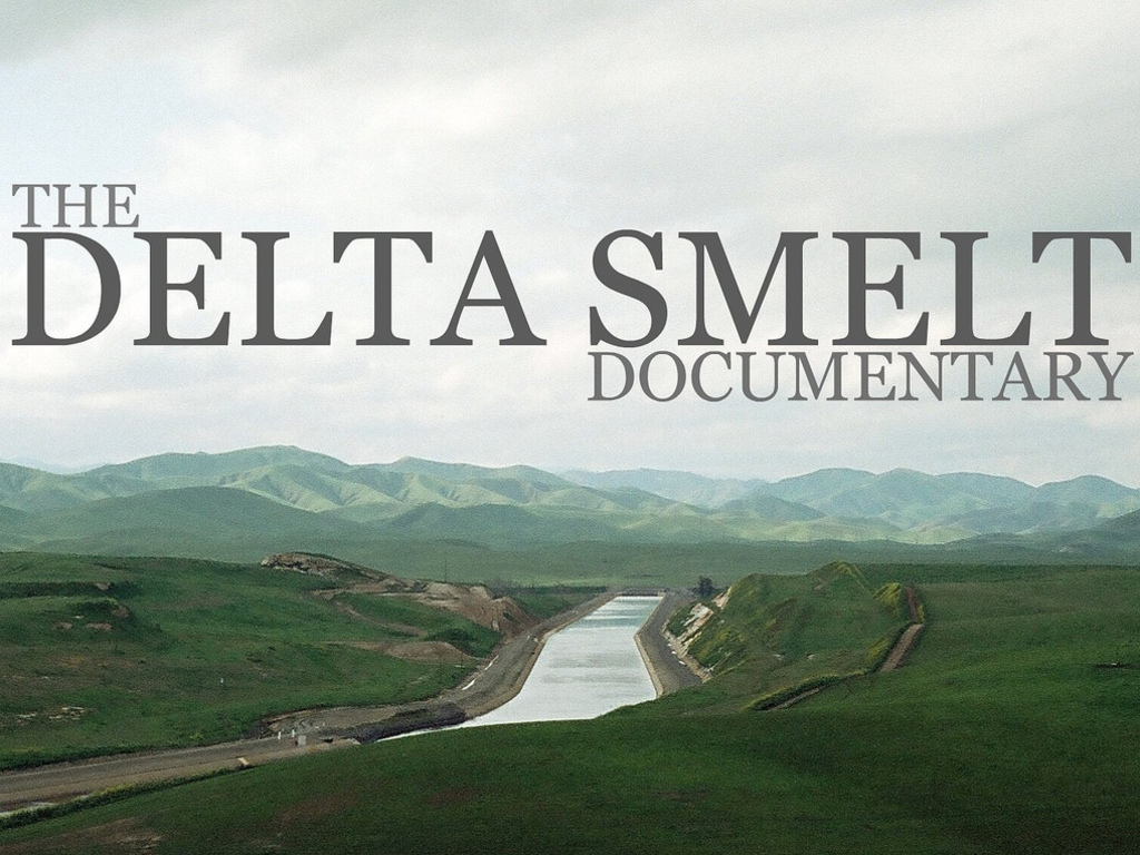 The Delta Smelt Documentary (Working Title) 's video poster