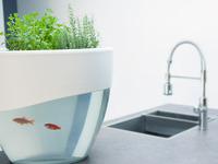 Vegua: Self-Cleaning Aquaponics System to Grow Organic Food