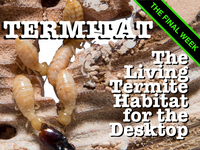 Termitat: The Live Termite Exhibit for Your Desktop