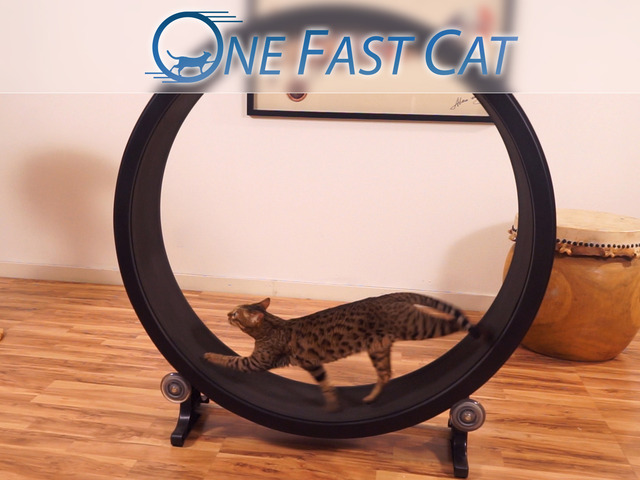 A Cat Hamster Wheel