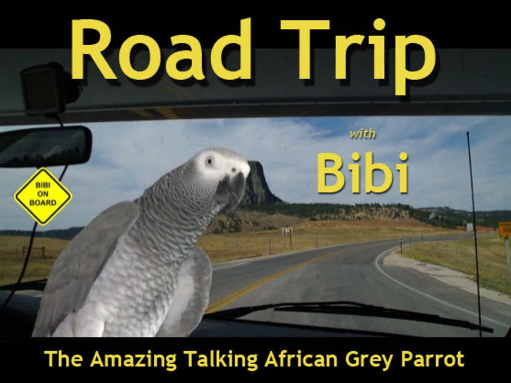 """ROAD TRIP"" with Bibi the African Grey Parrot's video poster"