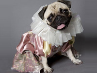 Pug-let: The First Ever All-Pug Production of Hamlet
