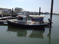 Bird Watching Cruises in Cape May New Jersey on a Boat