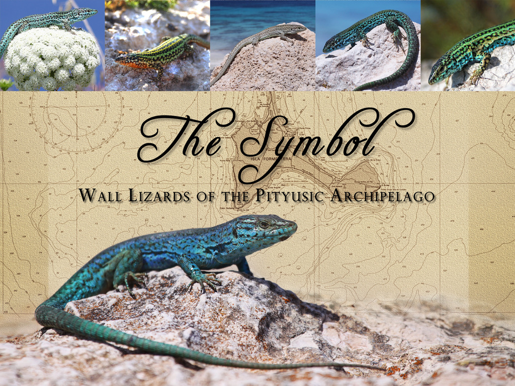 The Symbol: Wall Lizards of the Pityusic Archipelago's video poster