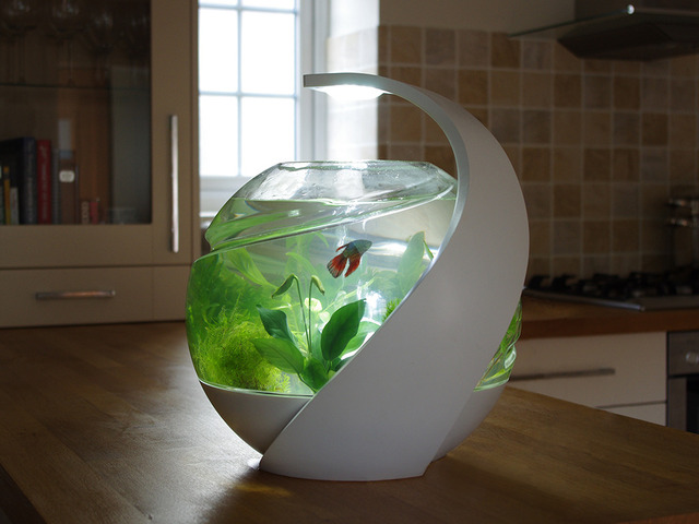 Avo the stylish self cleaning fish tank canceled by for Self cleaning betta fish tank