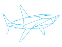 Shark Catapult Web Design & Development