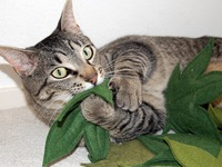 Cannabis Cat Leaves, Catnip Toys