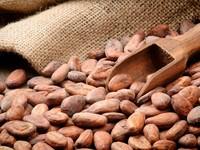 Mahogany Chocolates