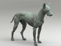 Canine Anatomy Sculpture