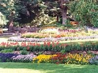 Grow your Own Flower Garden!