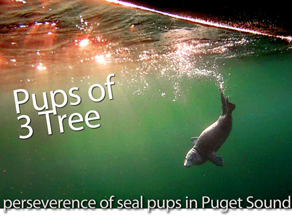 Seal Pups of 3 Tree's video poster