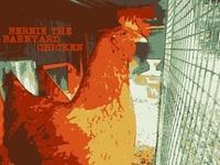 Bernie the Barnyard Chicken