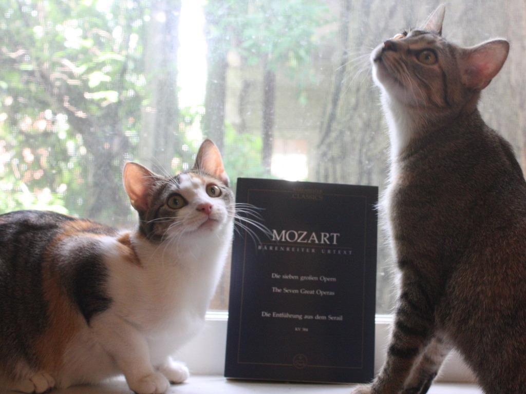 Mozart Opera Double Bill's video poster