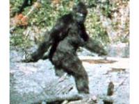 Bigfoot Solved!