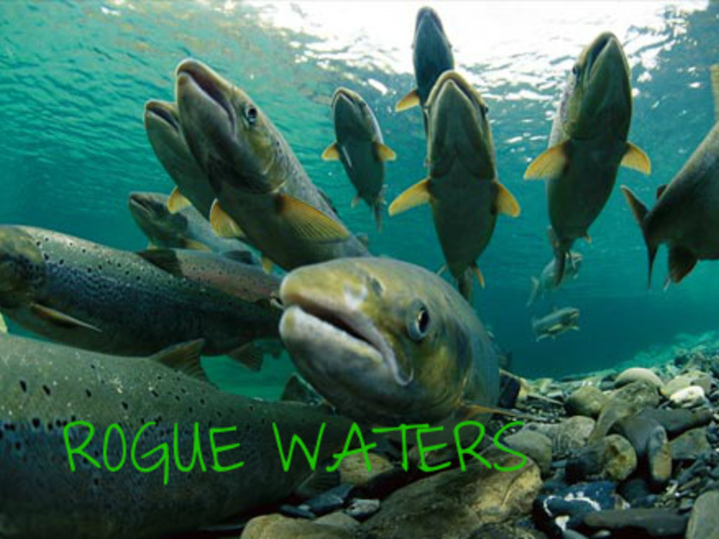 Rogue Waters - The Salmon Journey's video poster