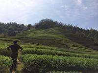 Tea Adventures